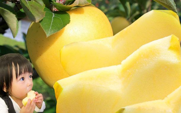 葉っぱの影は甘さのサイン 青森 GOLD葉とらずリンゴ 送料無料