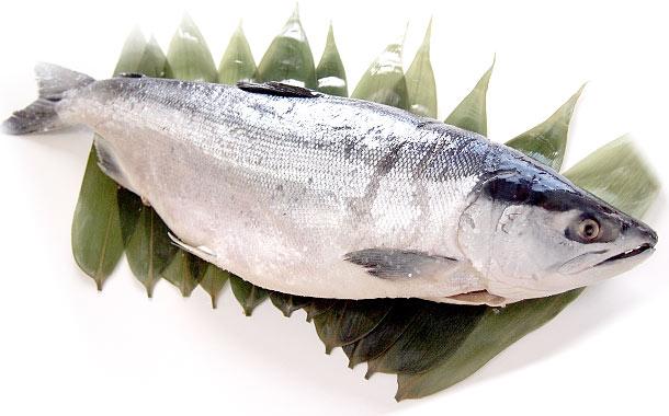 最高級紅鮭!北海道加工!ロシア産「天然紅鮭」1.6キロ以上 1本